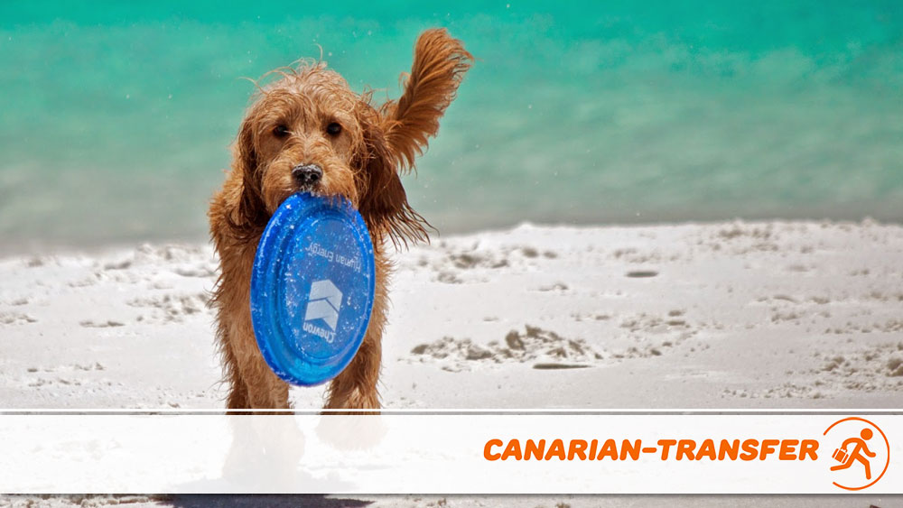 Beaches for dogs in Gran Canaria