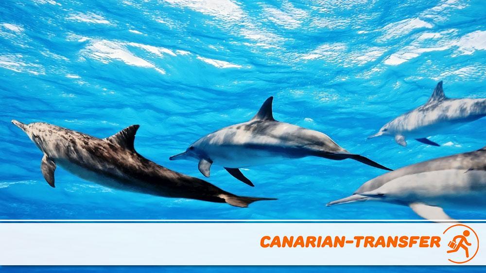 Cetacean watching in Lanzarote