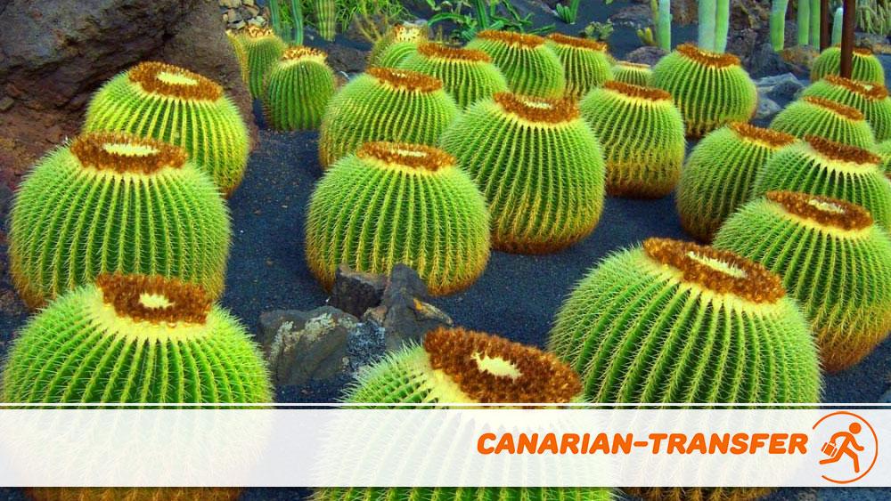 Cactus Garden in Lanzarote